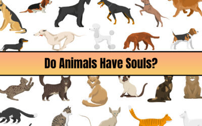Do Animals Have Souls?
